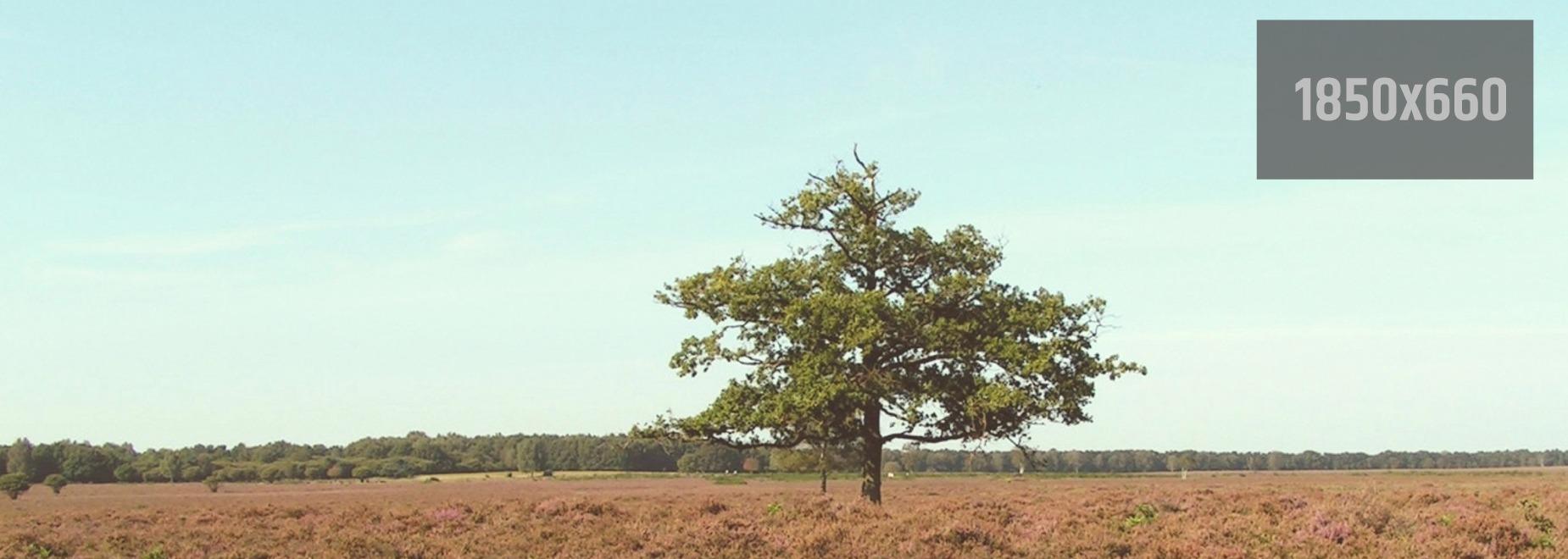 Saving this tree :: Neque porro quisquam est qui dolorem ipsum quia dolor sit amet, consectetur 1